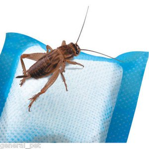 R-Zilla Cricket Water Pillows - 6 pk