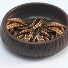 Lee's Aquarium & Pet Products Meal Worm Dish