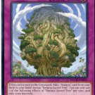 Yugioh Duelist New Challengers, Naturia Sacred Tree  NECH-EN076