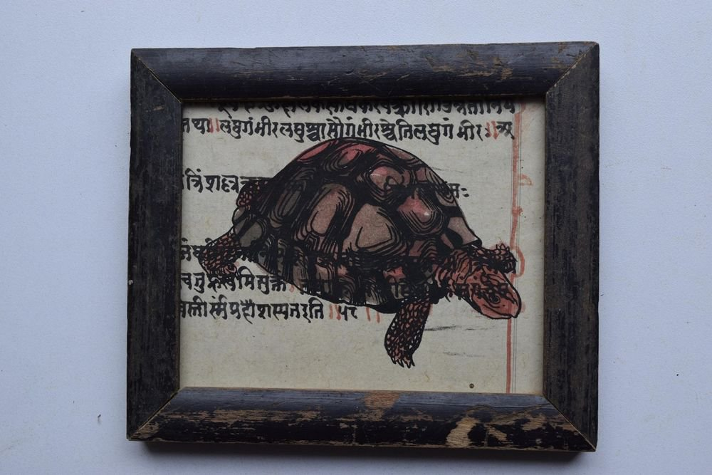 Turtle Painting on Manuscript Hand Color Painting in Old Wooden Frame #2995