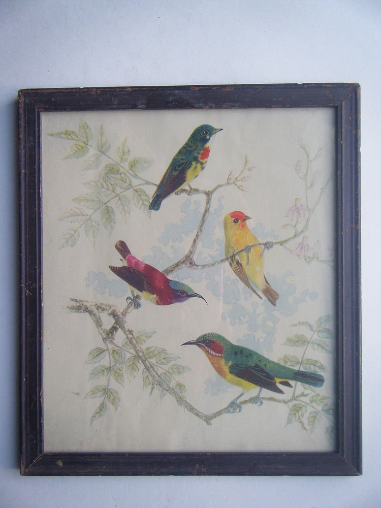 Birds Sparrows Old Original Hand Colour Painting in Old Wooden Frame #2798