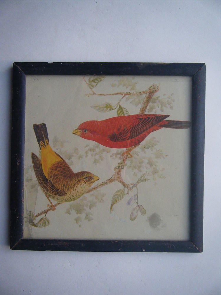 Birds Sparrows Old Original Hand Colour Painting in Old Wooden Frame #2797