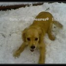 *Sassy's First Snow Day*  Color 8X10 Photo