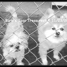 *Jail Dogs Sam & Cruz*  8X10 Black & White Photo