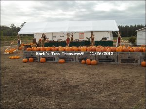 *Outside Pumpkin Store*   8X10 Color Photo