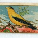 THE AMERICAN GOLDFINCH 1910 Bird Series T42 Tobacco Card