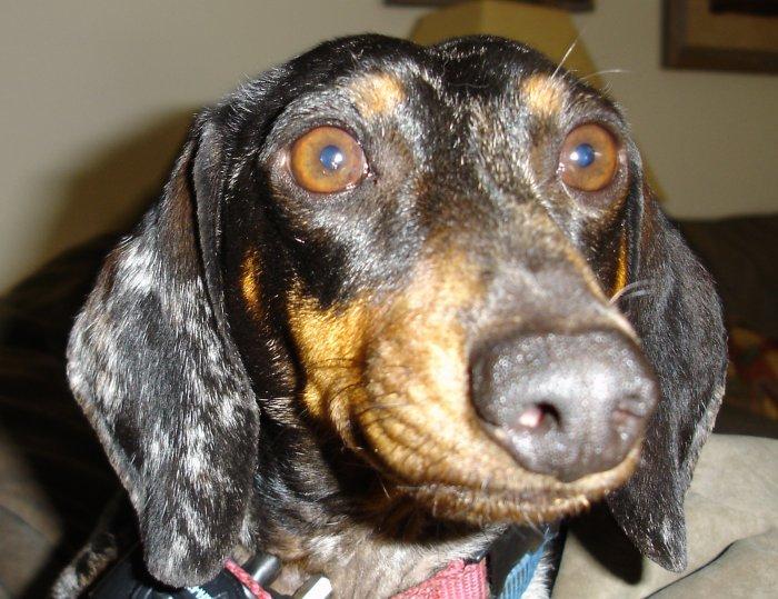 Dog Face Print - AAdf