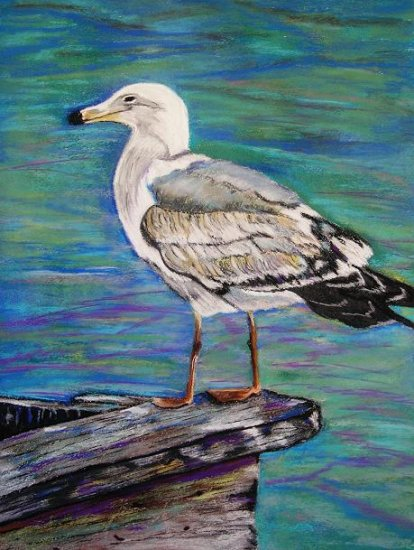Seagull - NW90107