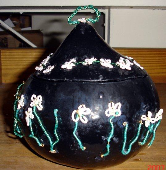 Black Daisy Gourd - AAbg