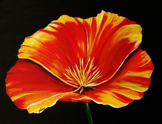 Orange Poppy - NWop