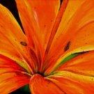Orange Lily Print - NWpp