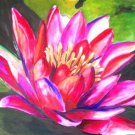 Waterlily Print - NWppp