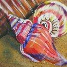 Seashell Print - NWssp