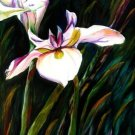 White Lily Print - NWwlp