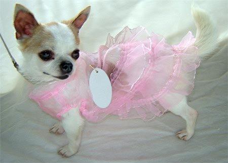 FREE SHIPPING Pink Lace Dog Summer Dress ~XS~