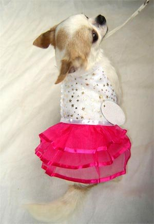 HOT Pink and Gold Star Dog Dress ~S~