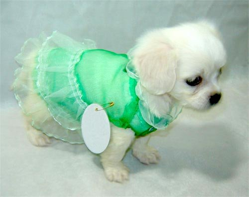 Green Lace Dog Dress for Summer   ~ S ~