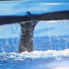 AIR BRUSHED WHALE TAIL IN OCEAN LICENSE PLATES