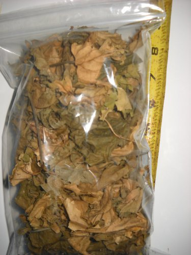 Hibiscus Dried leaf organic herb medical survival uses Hibiscus rosa-sinensis