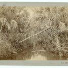 Florida Everglades Oversize Cabinet Card