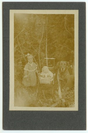 Dog, Baby, Carriage Photograph