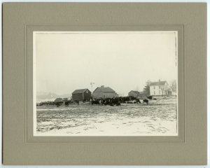Farm Scene with Cows Photograph