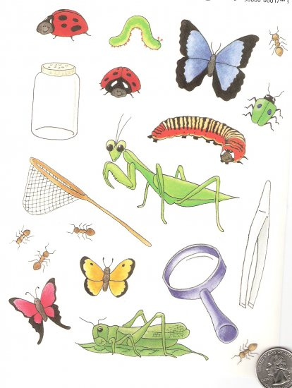 Got a bug collector? Net, Jar, Bugs, magnifying glass