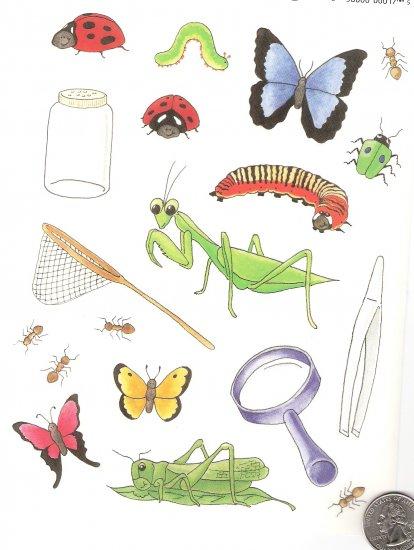 Got a bug collector? Net, Jar, Bugs, magnifying glass