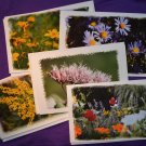Flower Photo Greeting Cards 5 pack Handmade