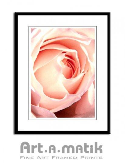 Pink Rose - Artamatik Framed Print