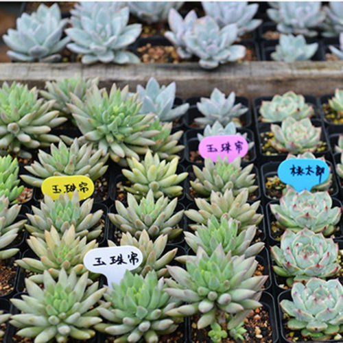 100 x Plastic Waterproof Plug-in Plant LABELS MARKER - price tags ID tags garden