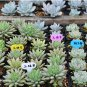 100x Waterproof Plastic Plant Cake LABELS MARKER price / ID tags garden business