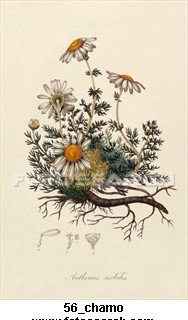 Chamomile Flowers--1 Ounce