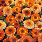 "Calendula~""POT CALENDULA MIX""~Seed!~~~~~~A Wonder Drug in Your Garden!"