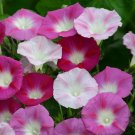 "Ipomoea~""LA VIE en ROSE"" MORNING GLORY~Seed!~~~~~~~~Stunning Mix of Pinks!"