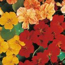 "Nasturtium~""WHIRLYBIRD MIX"" NASTURTIUM~Seeds!!~~~~~~~~Big & Beautiful Mounds!!"
