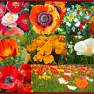 "Poppy~""CASCADE POCKET"" POPPY MIX~Seed!!!!~~My 4 Best Selling Varieties!"