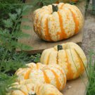 "Pumpkin~""HOOLIGAN"" PUMPKIN~Seeds!!!~~~~~~Kid-Sized!"