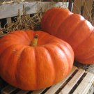 "Pumpkin~""CINDERELLA"" PUMPKIN~Seeds!!!~~~~Beautifully Shaped!!!"
