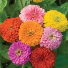 Zinnia~&quot;CALIFORNIA GIANTS MIX&quot; ZINNIA~Seeds!!!~~~~~~~~Big, Beautiful Flowers!