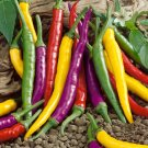 "Hot Pepper~""CAYENNE BLEND"" HOT PEPPER~Seeds!!!!~~~~~Heat in Every Color of the Rainbow!!!"