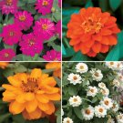 "Zinnia~""PROFUSION DOUBLE MIX"" ZINNIA~Seeds!!!!~~~Lots of Cutting Flowers!"