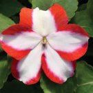 Impatiens~&quot;ACCENT PREMIUM ORANGE STAR&quot; IMPATIENS-Seeds!~~~~~~~~~What a Beauty!