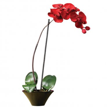 Holiday Phalaenopsis Orchid Arrangement 4859