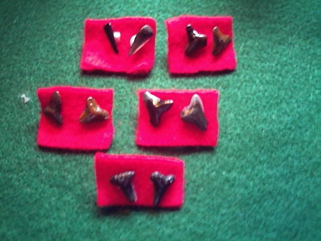 Item 016 Sharks tooth earrings
