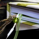 Hand Bound Journal with Ivory and Green Chevron Cover, Twine/Ribbon Bookmarks, &Gold Key Charm