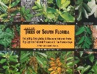 Native Trees of South Florida, Everglades National Park and the Florida Keys