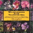 Wildflowers of Yellowstone, Grand Teton and Glacier National Parks
