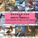 Shorebirds of North America