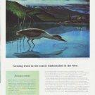 "1959 Weyerhaeuser Ad ""farming trees"""